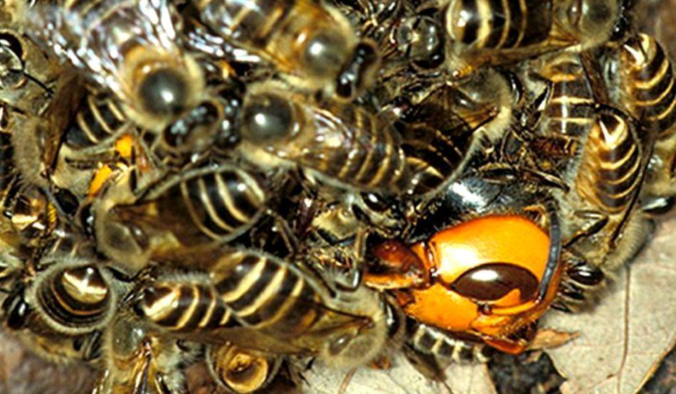 albinele fac bani online)
