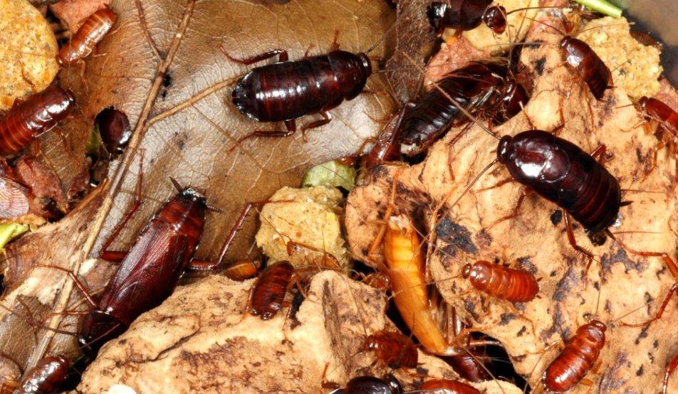 un gândac care nu poate face bani)
