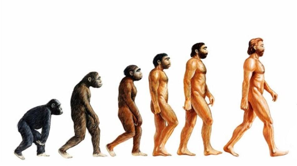 dimensiunea penisului cimpanzeului)