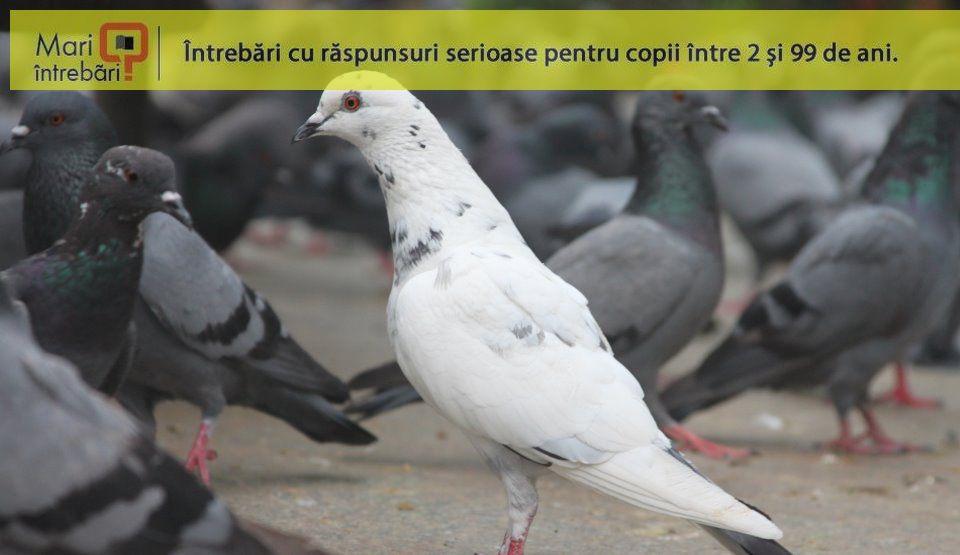 gaura de vierme pentru porumbei reguli pentru prevenirea bolilor de helmint