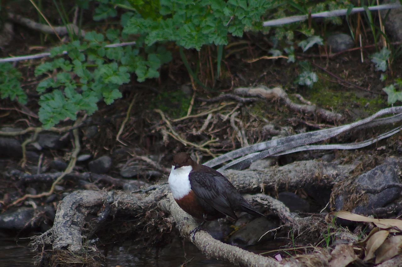 Păsările consumă sute de bucăți de plastic în fiecare zi