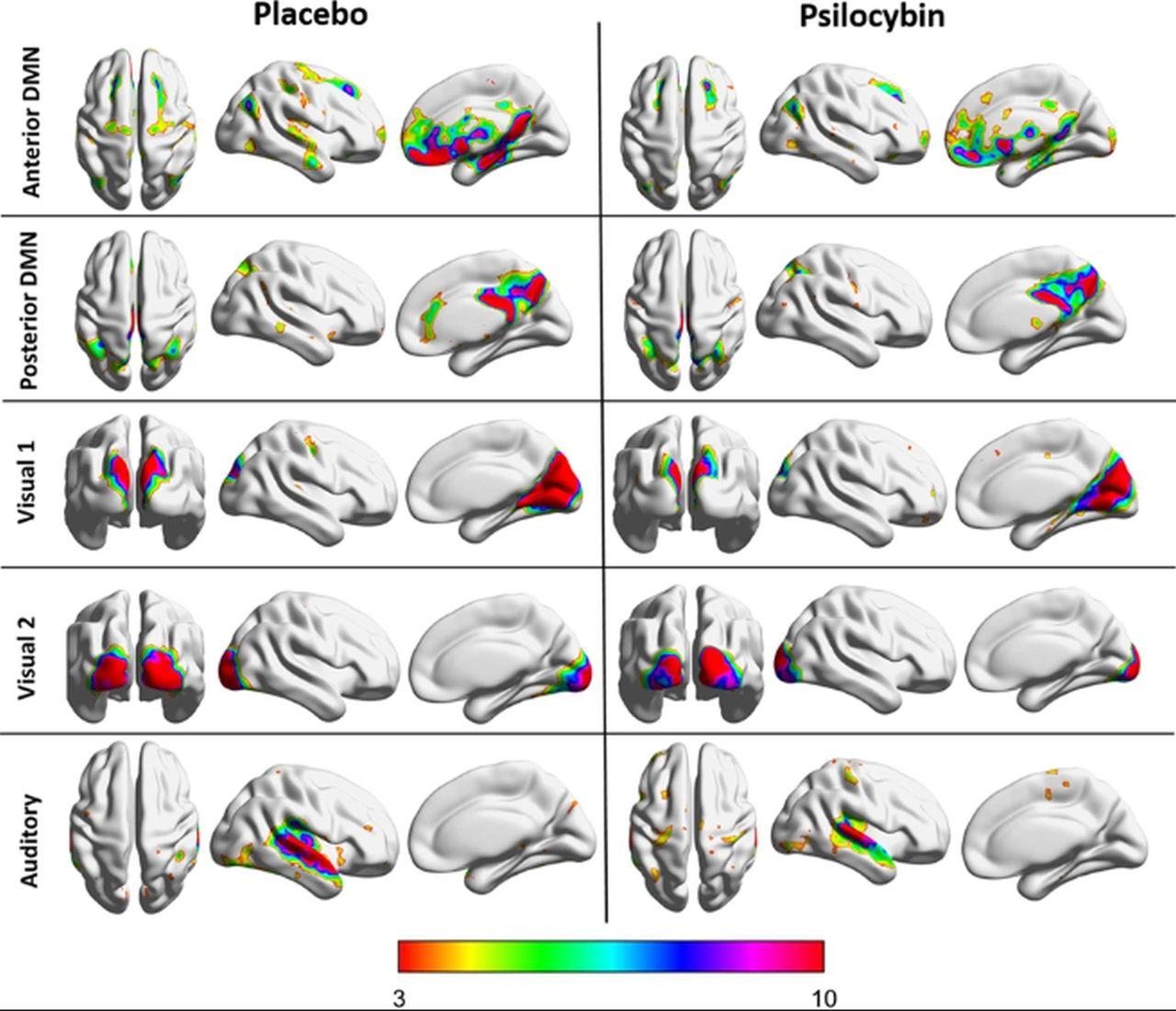 """Primul studiu care arată modul în care ciupercile psihoactive duc la """"moartea egoului"""""""