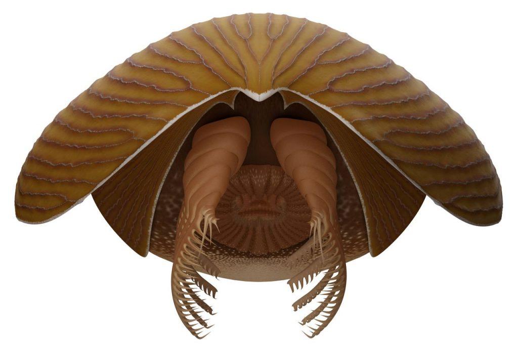 creatura marina Titanokorys