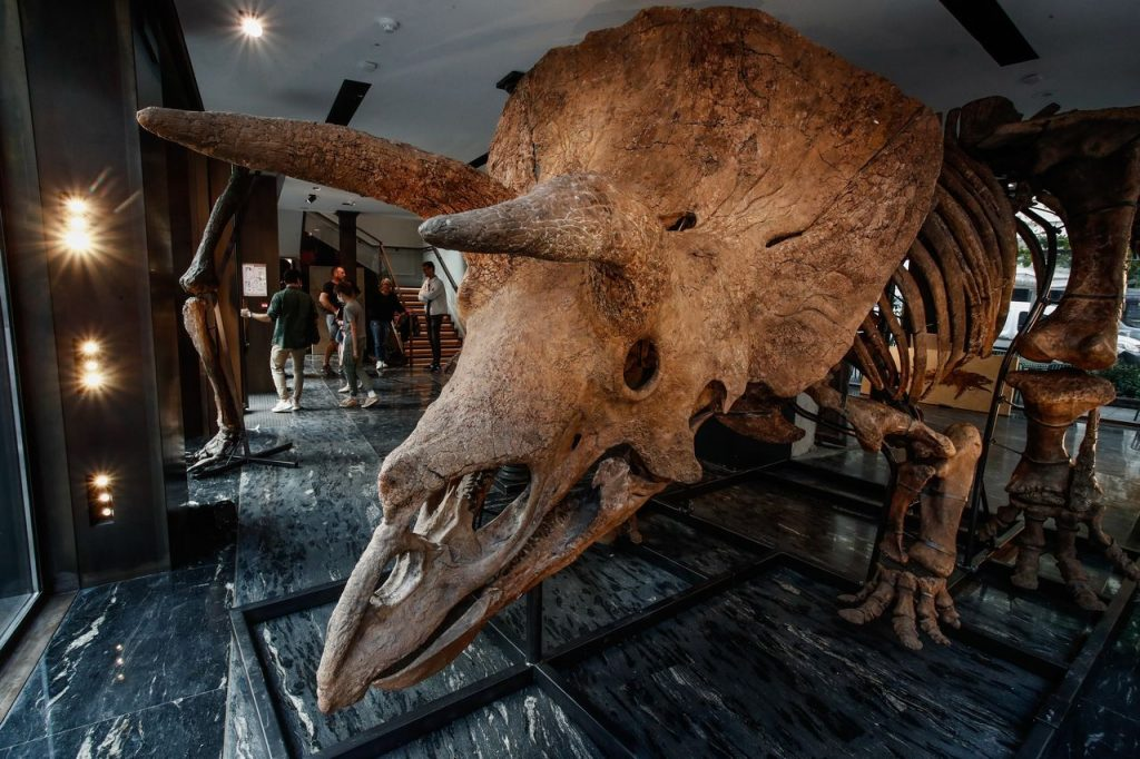 schelet triceratops Big John
