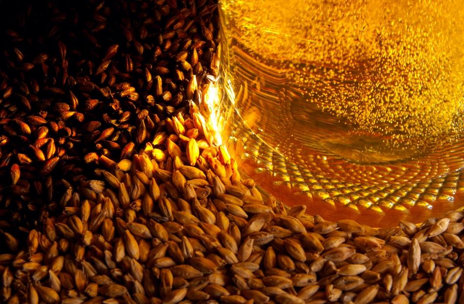 Orzul este utilizat de secole în Europa pentru fabricarea berii