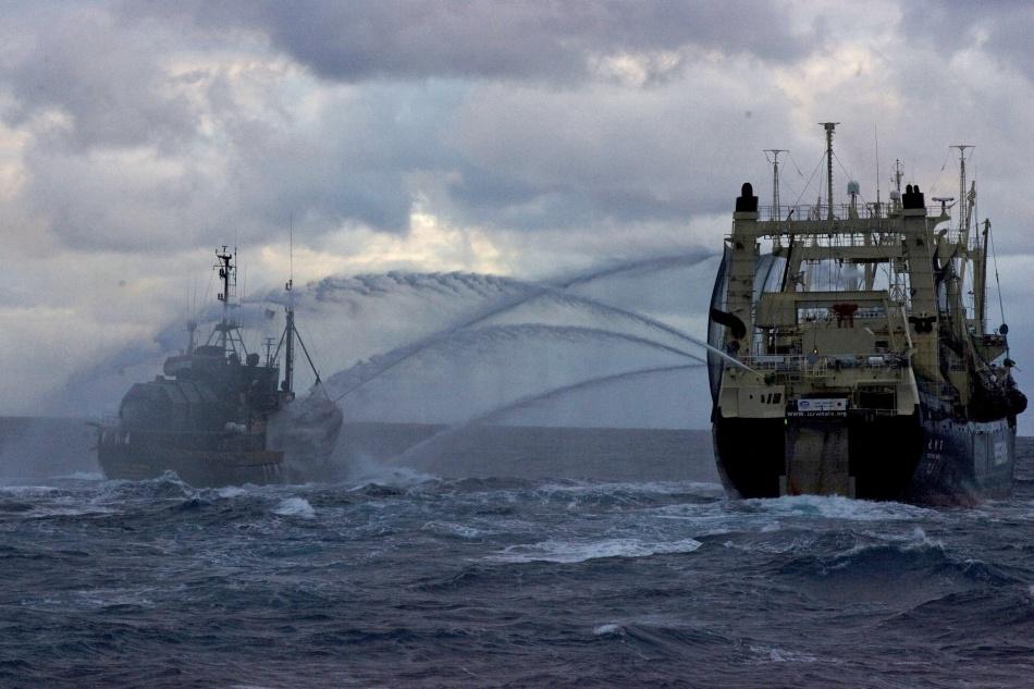 Paul Watson: păstorul biodiversităţii marine în lupta contra criminalilor