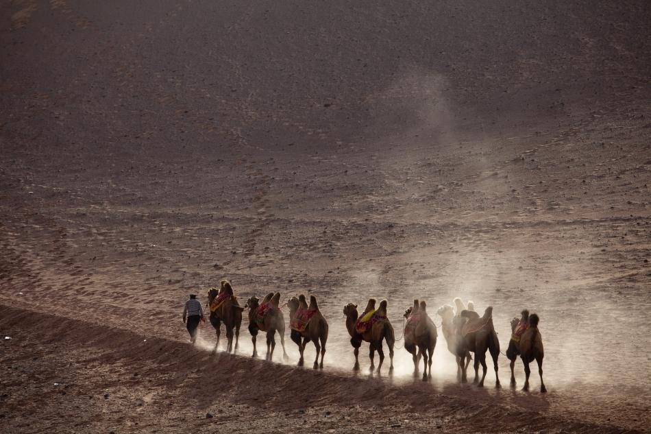 Caravană de cămile în Deşertul Gobi