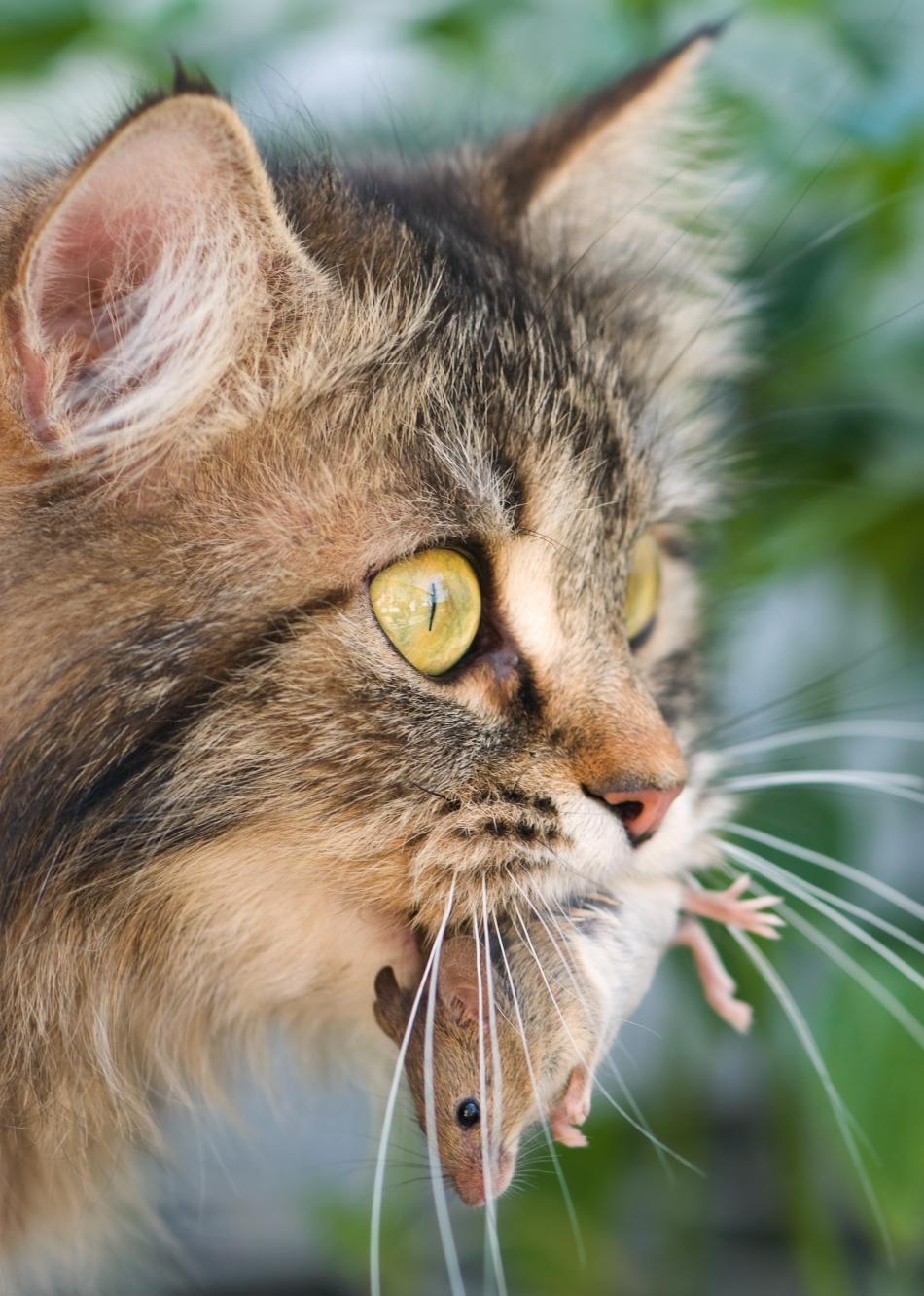 Care va fi soarta pisicilor în următorii 50 de ani?