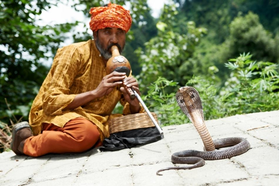 Şarpele urmăreşte atent mişcările instumentului muzical Bheem