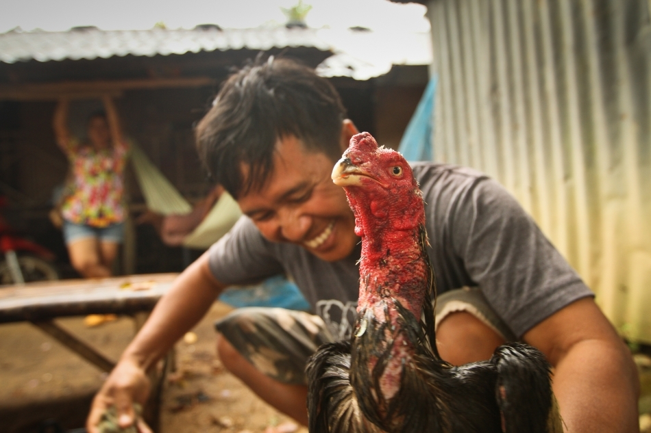 Un crescător thailandez alături de cocoşul său luptător