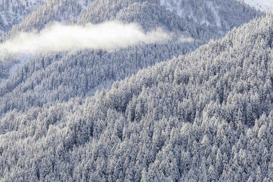 Iarnă în pădurile din Carpaţi