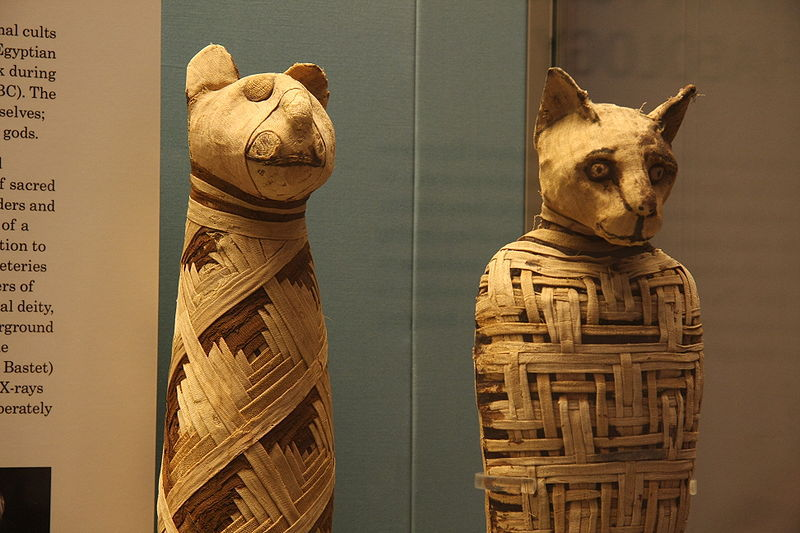 Pisicile erau mumificate deseori ca ofrandă pentru zeiţa Bastet, protectoarea copiilor şi a mamelor