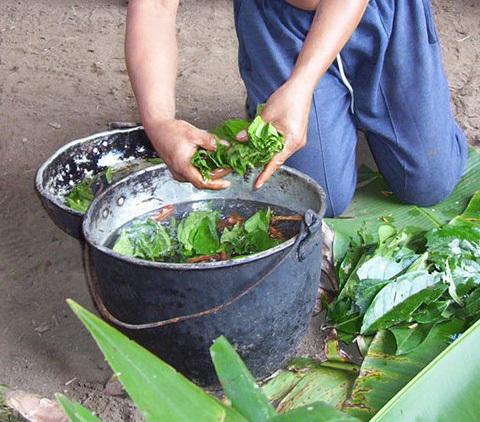 Prepararea băuturii ayahuasca