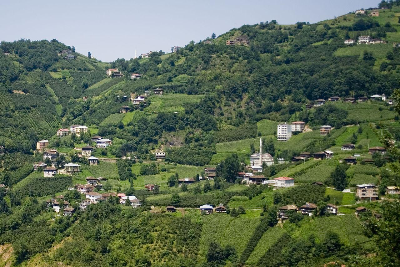 """Regiunea muntoasă Trabzon, din nordul Turciei, unde se produce """"mierea nebunilor"""""""