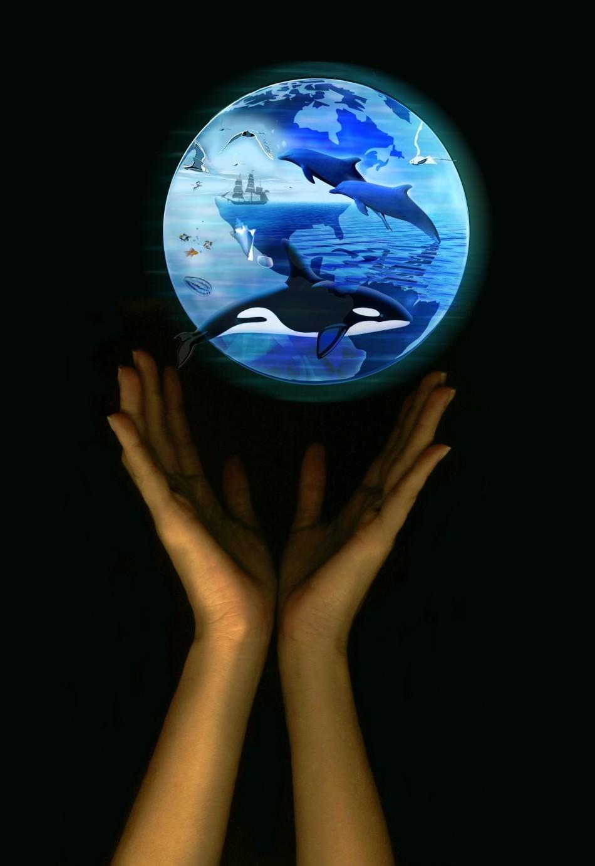 Îndemn pentru salvarea faunei marine