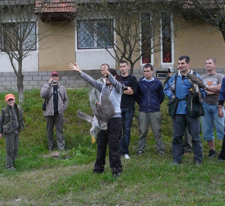 Membrii Asociaţiei Peregrinus în momentul eliberării unei femele adulte de uliu porumbar, pasărea fiind prinsă iniţial de columbofili