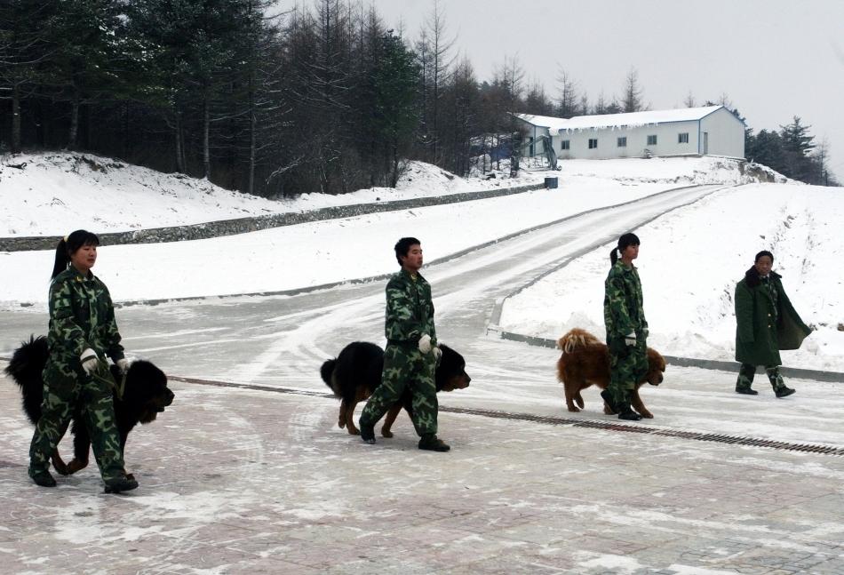 Unitate canina din cadrul poliţiei chineze in timpul unei defilări şi prezentări a rasei