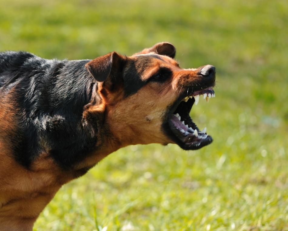 10 dintre cele mai periculoase animale din lume