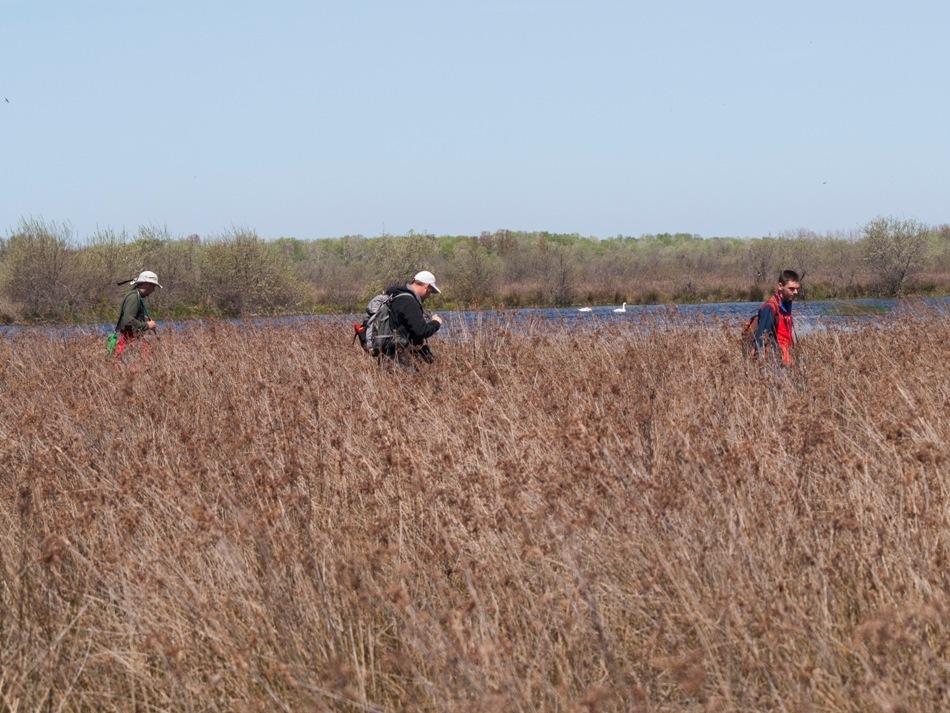 Cercetătorii Tiberiu Săhlean, Mihai Huţuleac şi Alexandru Strugariu aflaţi pe teren în Delta Dunării în căutare de vipere şi alte reptile.