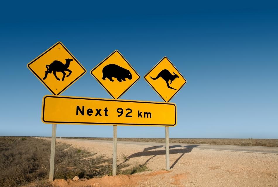 Semne de atenţionare pentru şoferi, cu privire la existenţa dromaderilor, wombaţilor şi cangurilor.