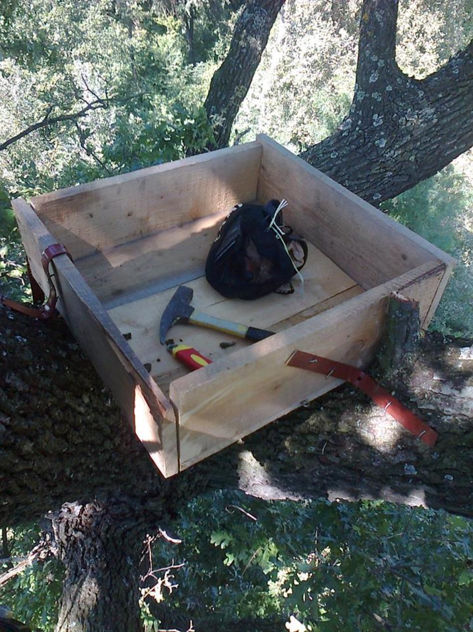 Unul dintre cuiburile artificiale pentru şoimii dunăreni, montat de membrii SOR într-un arbore din Judeţul Olt.