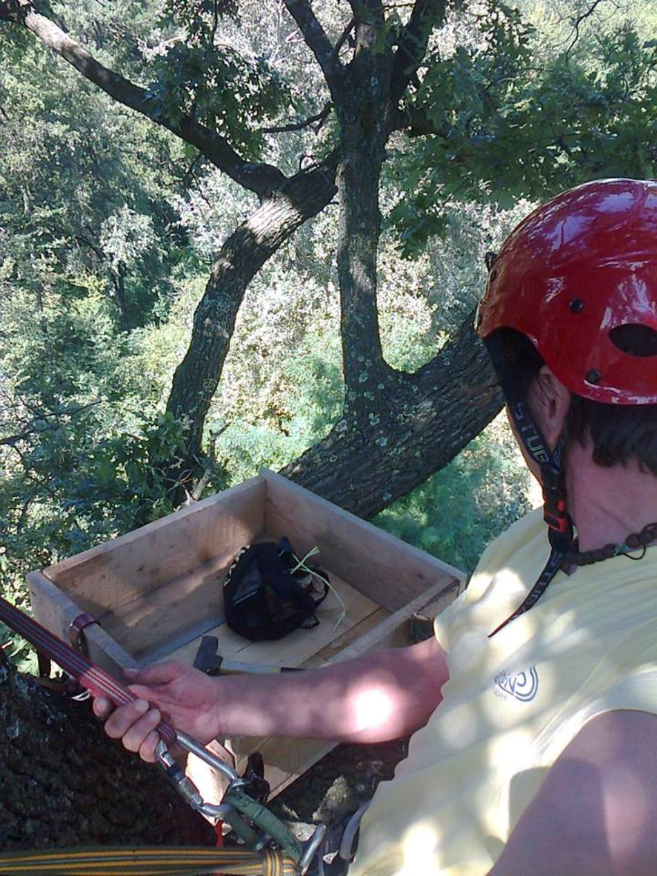 Un membru SOR verifică stabilitatea cuibului artificial montat pentru şoimii dunăreni.