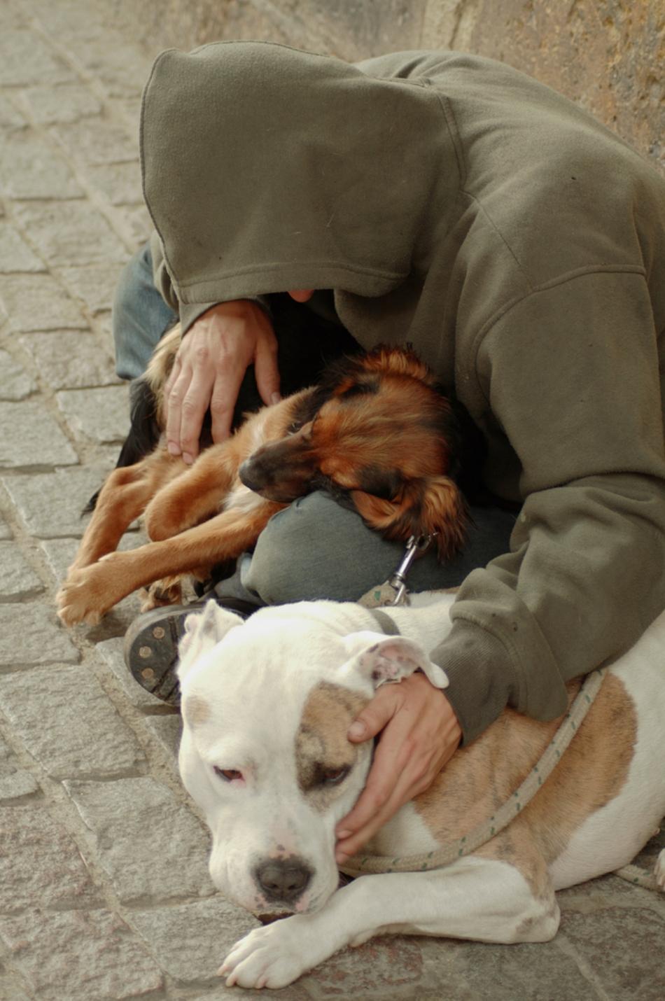 Adesea, câinii maidanezi tânjesc după afecţiunea oamenilor la fel precum câinii de rasă.