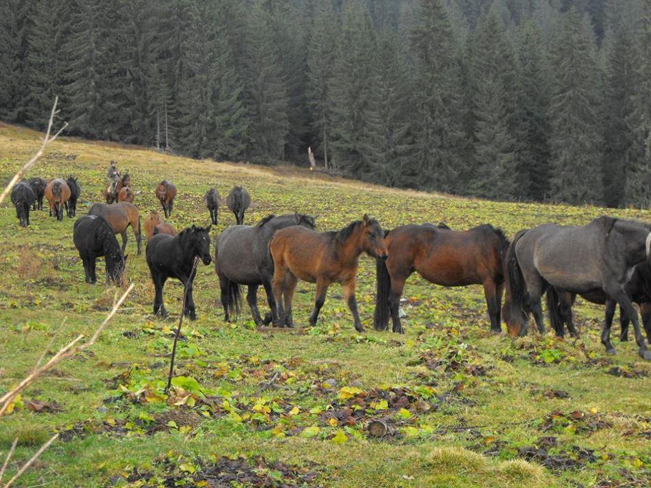 Cai huşuli în pădure.