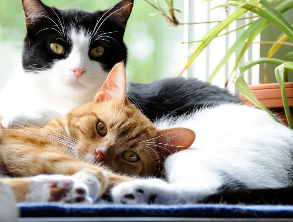 FOTO: Publimedia/Shutterstock