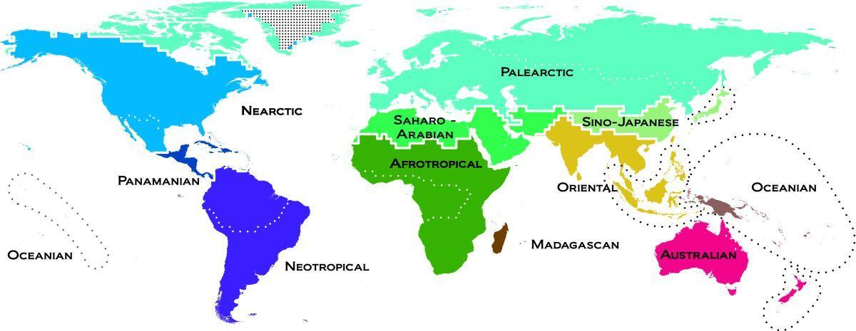 Harta vertebratelor realizată de Ben Holt