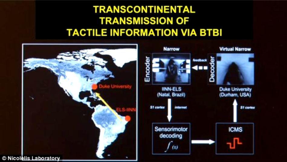 Telepatie transcontinentală: comunicarea mentală între şobolani a funcţionat chiar la mare distanţă.
