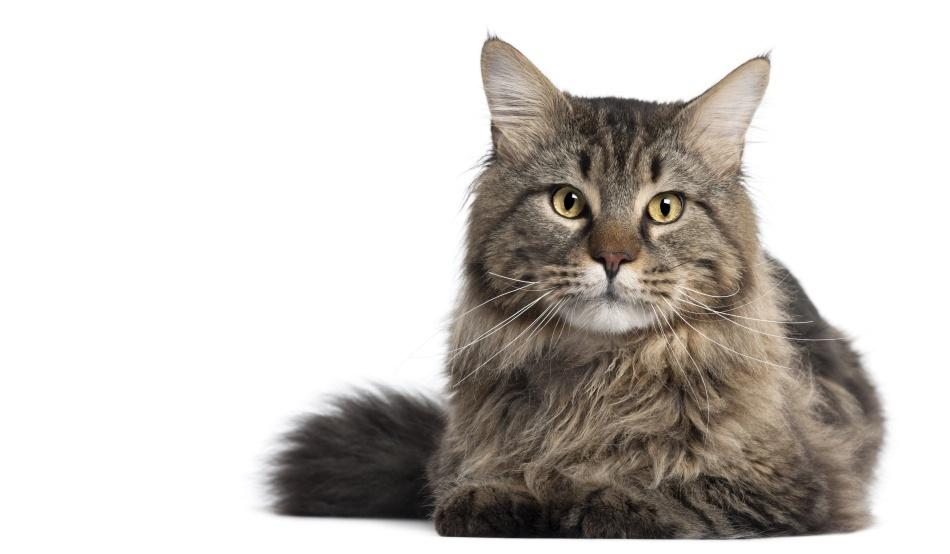 Tot ce nu ştiai despre pisici şi ţi-a fost teamă să întrebi