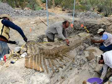 Descoperire rară: arheologii au dezgropat o coadă de dinozaur intactă