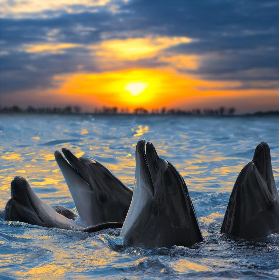 Delfini la asfinţit