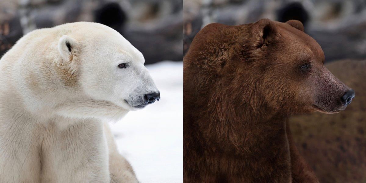 În imaginea din stânga este un urs polar, iar în cea din dreapta, un grizzly