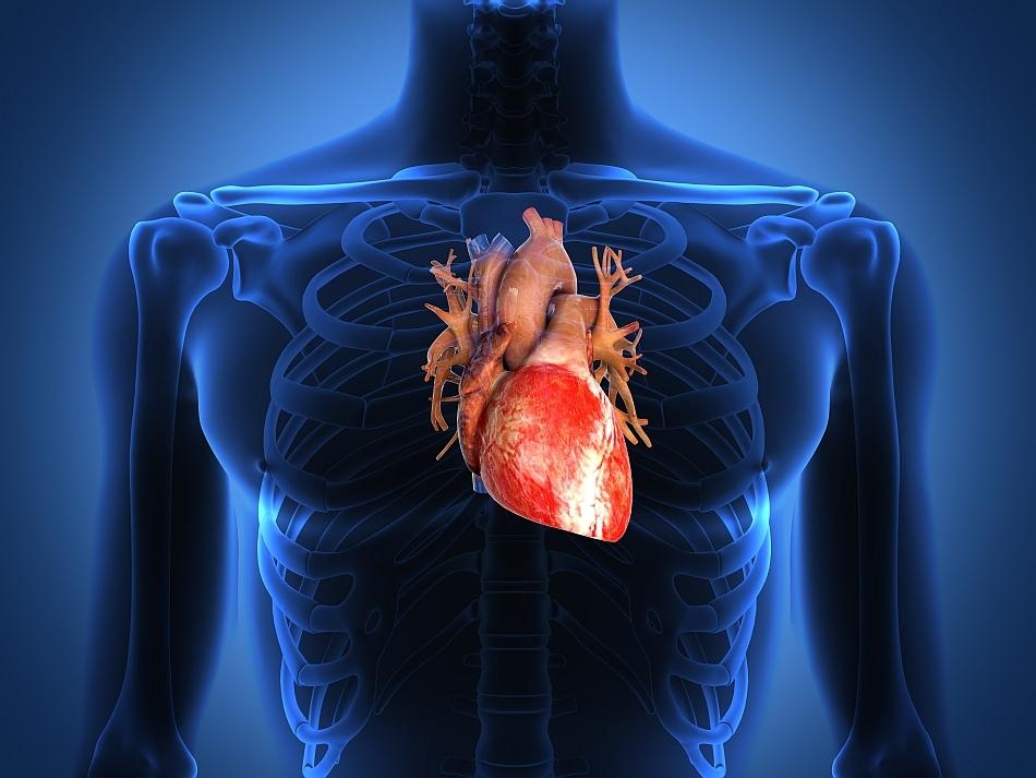 De ce unii oameni pot mânca foarte mult fără a avea probleme de inimă?