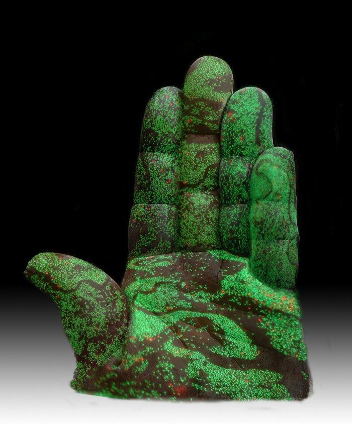 O mână plină de bacterii