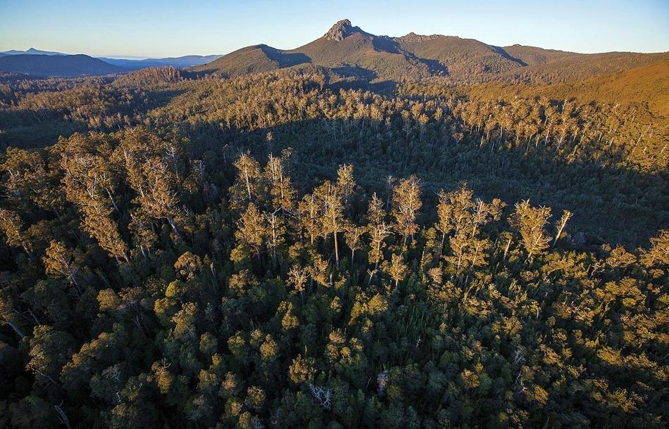 Australiei i-ar putea fi refuzată autorizaţia de a declasa o parte din pădurile din Tasmania