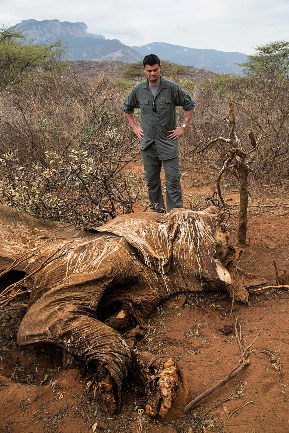 Braconierii ucid aproape 100 de elefanţi zilnic, pentru a le lua fildeşii.