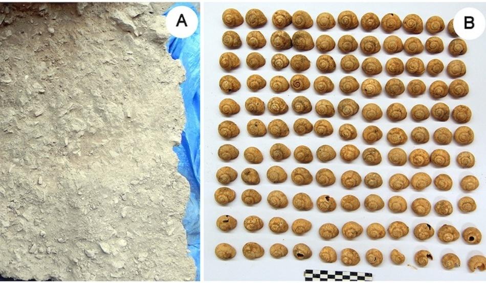 Melcii făceau parte integrantă din dieta omului paleolitic, acum 30.000 de ani