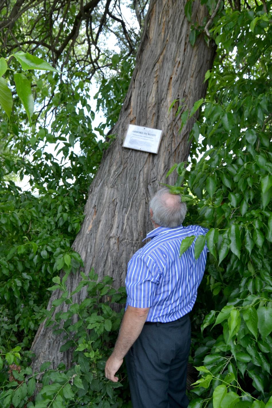 Un copac ornamental, numit popular portocal fals, poate fi vazut in satul iesean Medeleni din comuna Golaesti, miercuri, 2 iulie 2014.