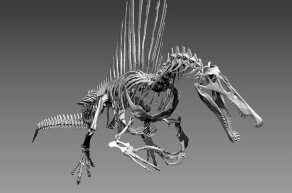 Noua reconstituire a înfăţişării lui Spinosaurus aegyptiacus: un prădător bine adaptat la viaţa acvatică.