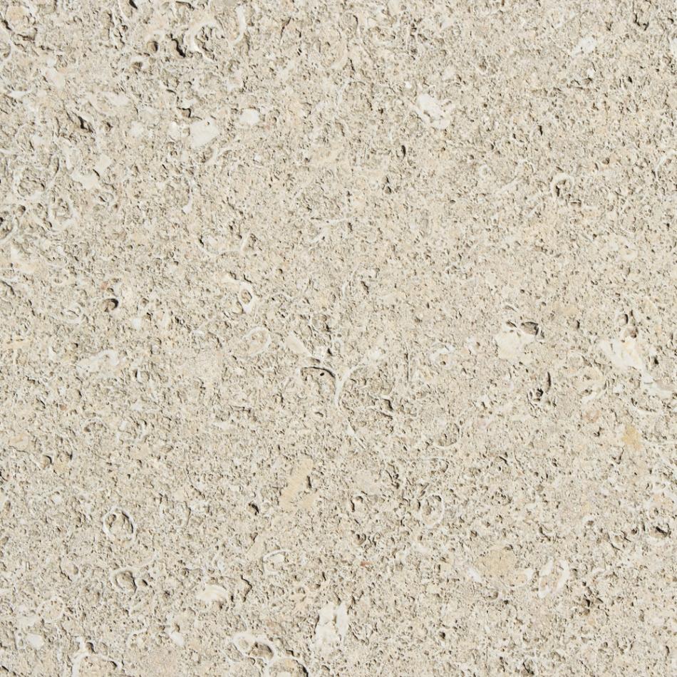 Fosile într-o dală de piatră
