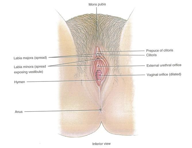totul despre penis și vulvă)
