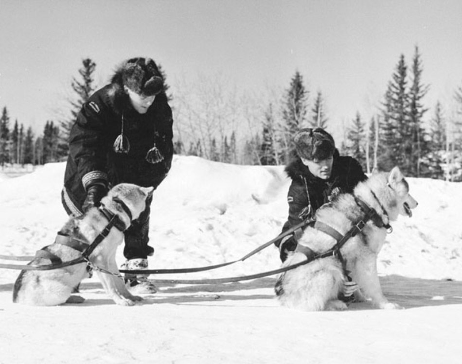 caini folositi de politia canadiana