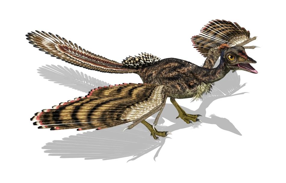 """Archaeopteryx reprezintă, după opinia specialiştilor, o formă de tranziţie între dinozaurii theropozi cu pene şi păsările  """"adevărate""""."""