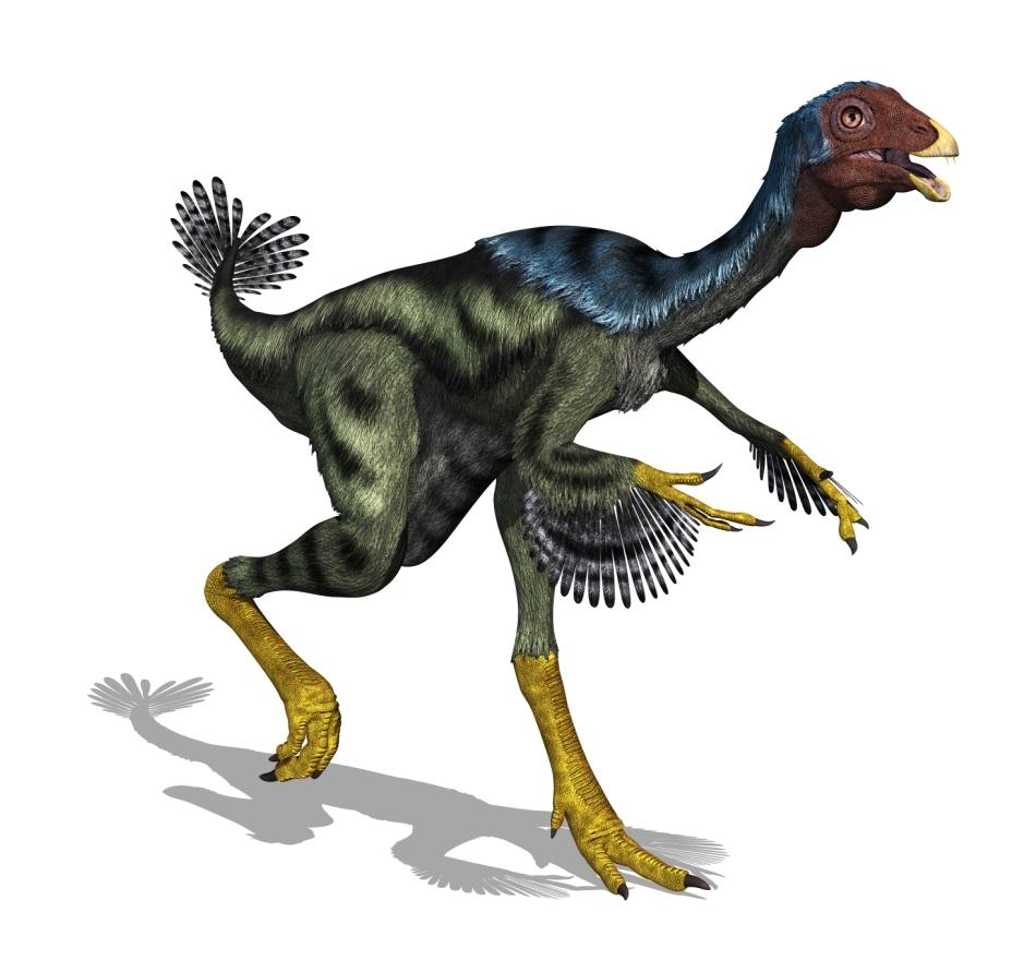Dinozaurii theropozi cu pene sunt consideraţi strămoşii păsărilor.