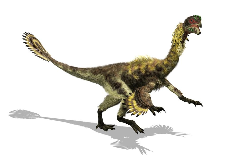 Penele dinozaurilor serveau altor scopuri decât zborul, cel mai probabil termoreglării şi paradelor nupţiale.