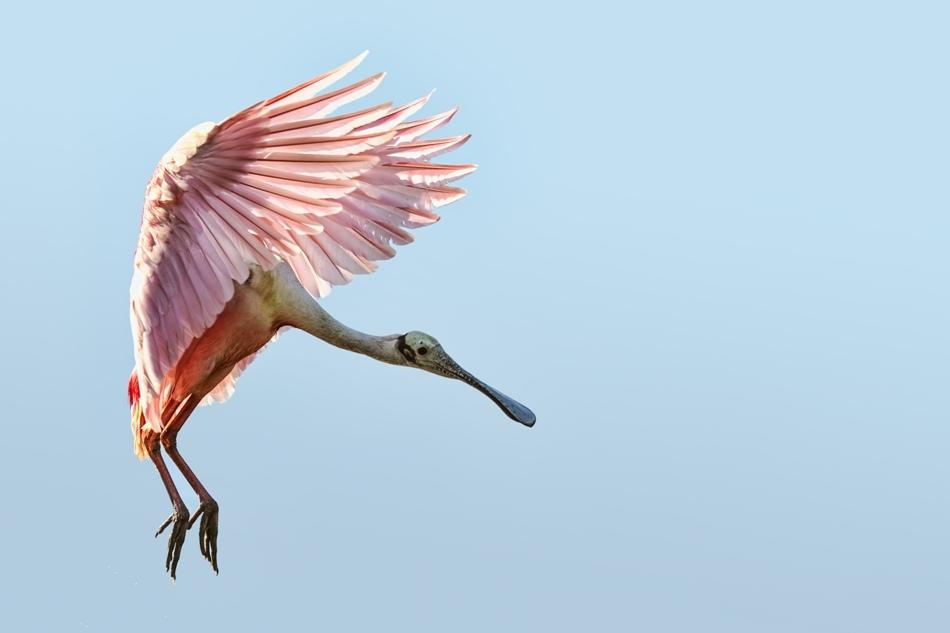 Aripile asimetrice, cu un aranjament specific de pene, permit păsărilor să învingă atracţia gravitaţională şi să se înalţe în zbor.