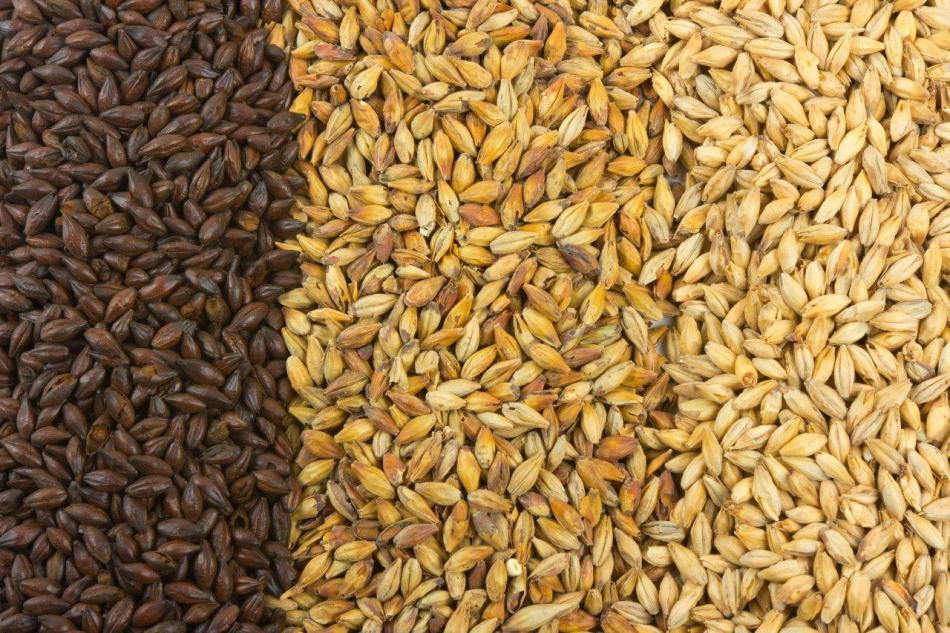 Seminţe de cereale din soiuri ameliorate